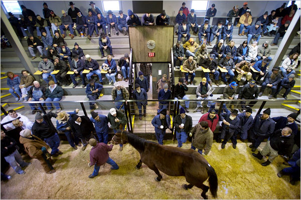 A typical livestock auction. Which of these fine people are