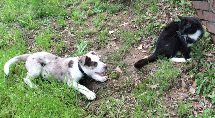 """According to the family of this Australian shepherd/cattle dog mix, once the puppy is big enough he'll be living outside (on a chain, no less) because he's """"too active."""""""