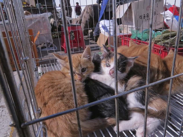 Kittens await their fate in a meat cage. Photo credit: SayNoToDogMeat.Net