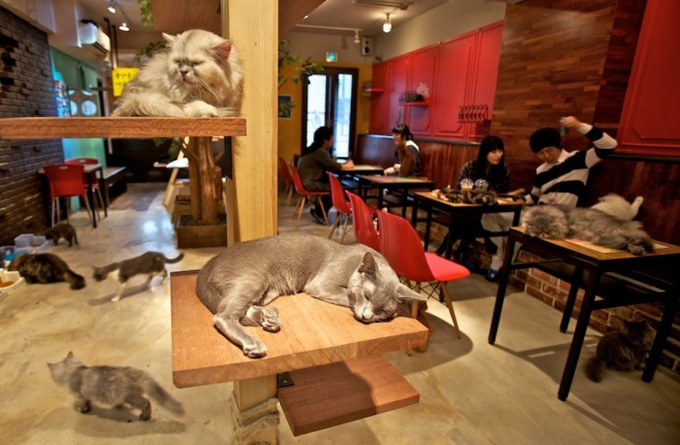 A typical South Korean cat cafe. Photo credit: korcan50years.com