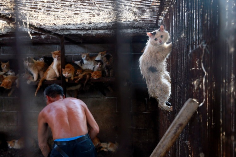 A cat climbs up the cage at the slaughterhouse, trying to escape. This cat was later rescued by Peter Li, HSI China policy specialist. Photo credit: Humane Society International.