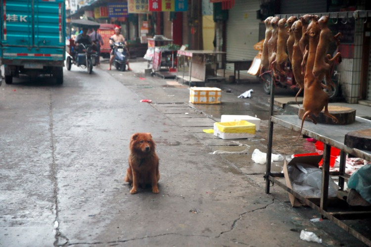 Dog carcasses hung up for sale in Dongkou market, as a dog looks on. Photo credit: Humane Society International.