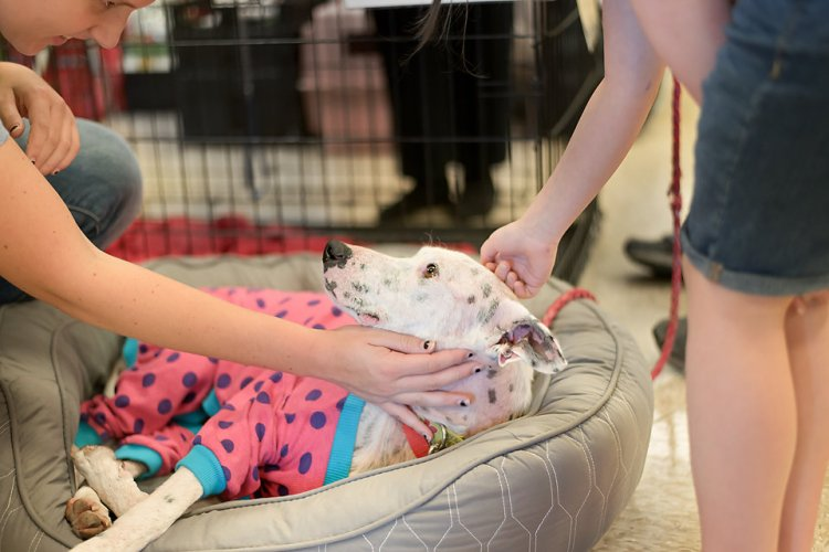 Sunshine getting some love from her admirers at a Pause for Paws adoption event. She loves having her head petted! Photo credit: Corazon Photography