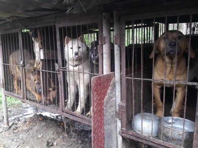SK dog meat farm