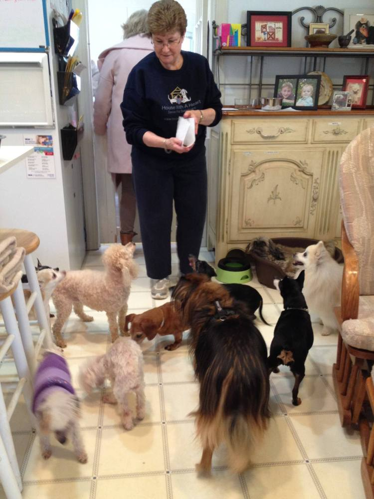 Volunteer Wendy and pups
