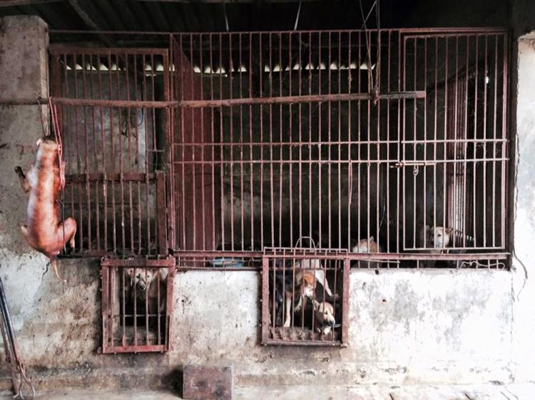 Hanoi slaughterhouse-2