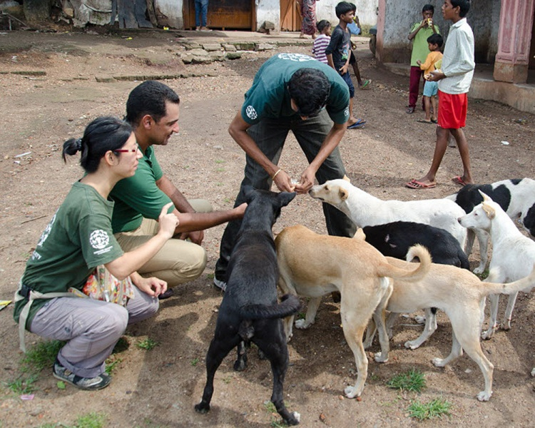 Stray Dog Bite Treatment In India