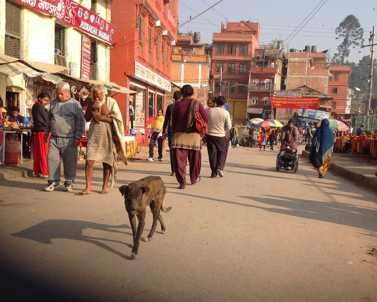 Kathmandu street dogs-1-blog