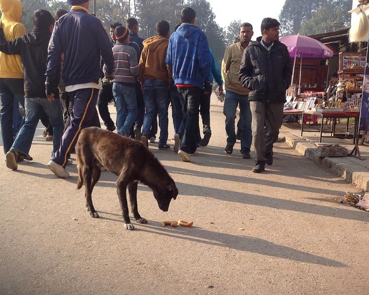 Kathmandu street dogs-3-blog