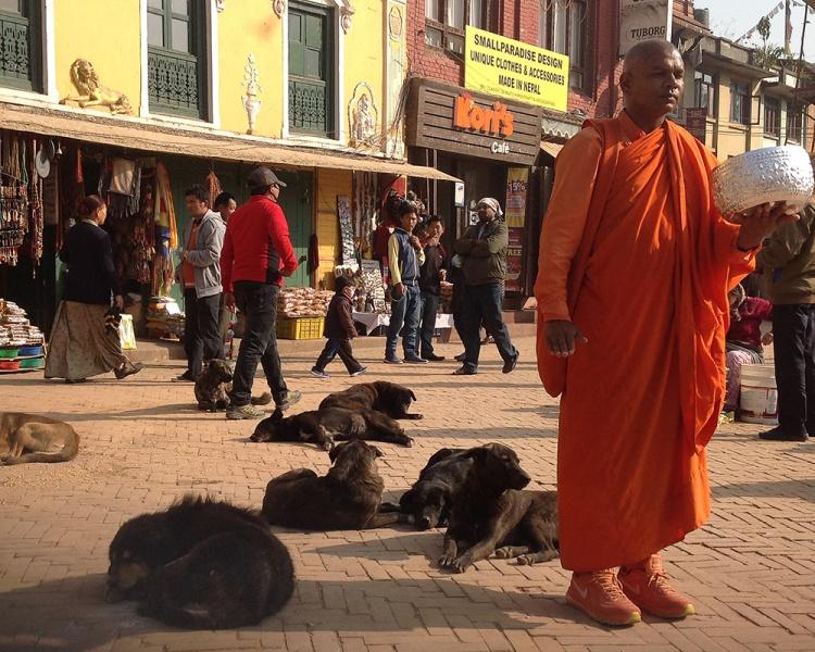 Kathmanud street dogs-4-blog