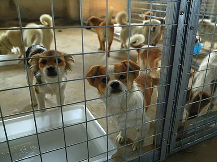 120 dogs at HSI shelter-HSI