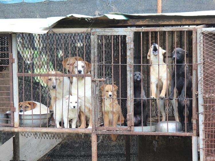 Dog Farm 3_Busan_190414 (55)-blog crop