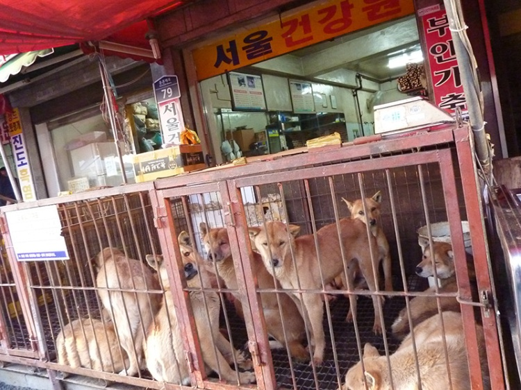Dog market-Korea-blog crop
