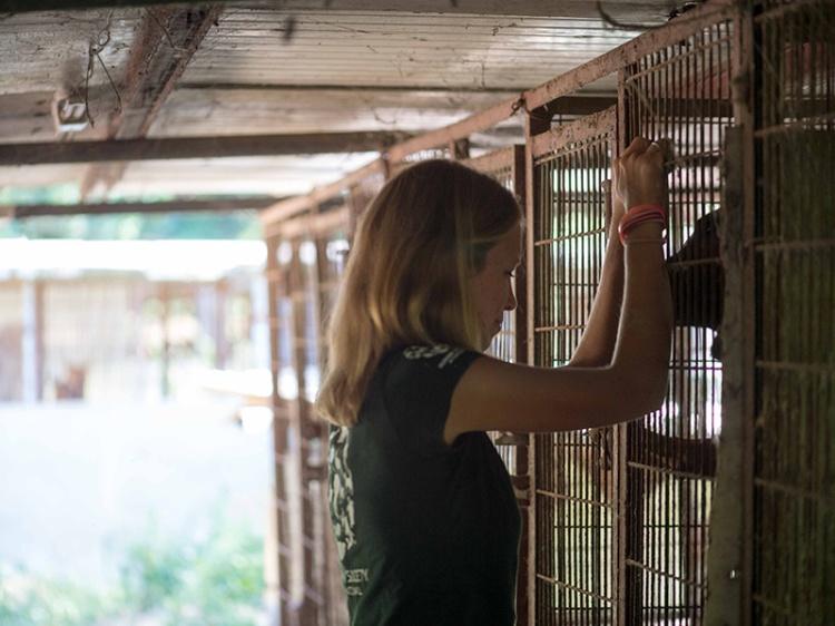 Lola at dog farm-blog crop
